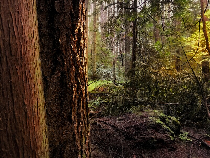 pacific spirit trail2